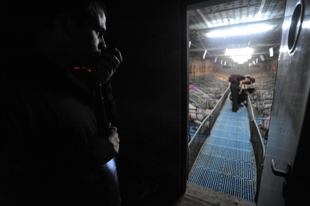 infiltrato industria carne