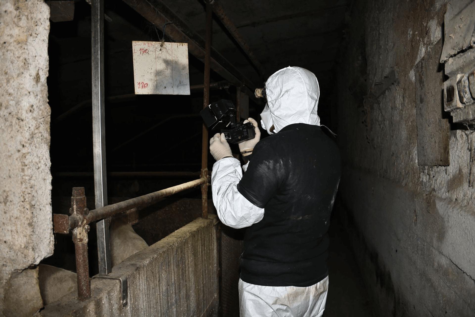 investigatore inchiesta maiali prosciutto