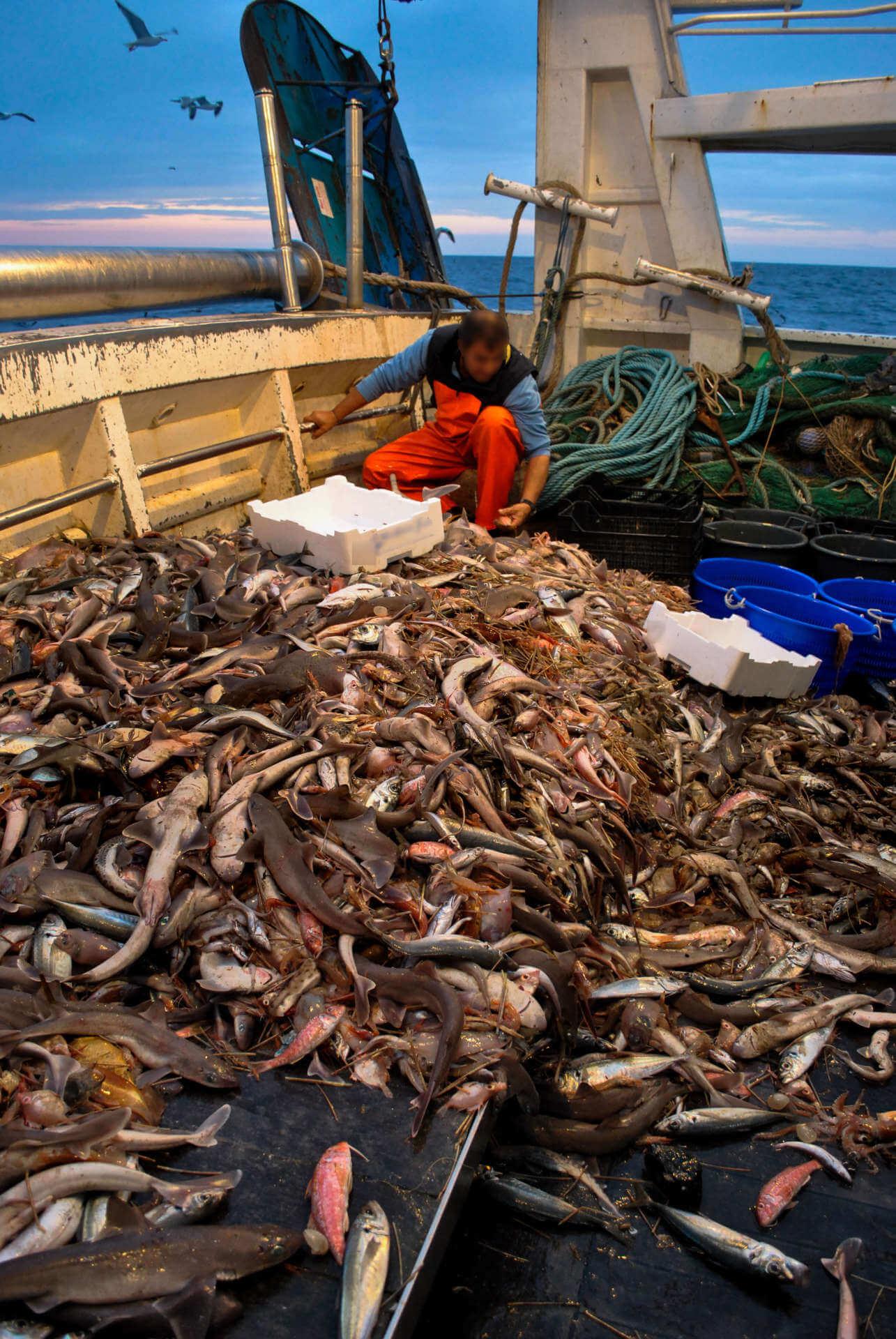 pescatore con pesci tramonto