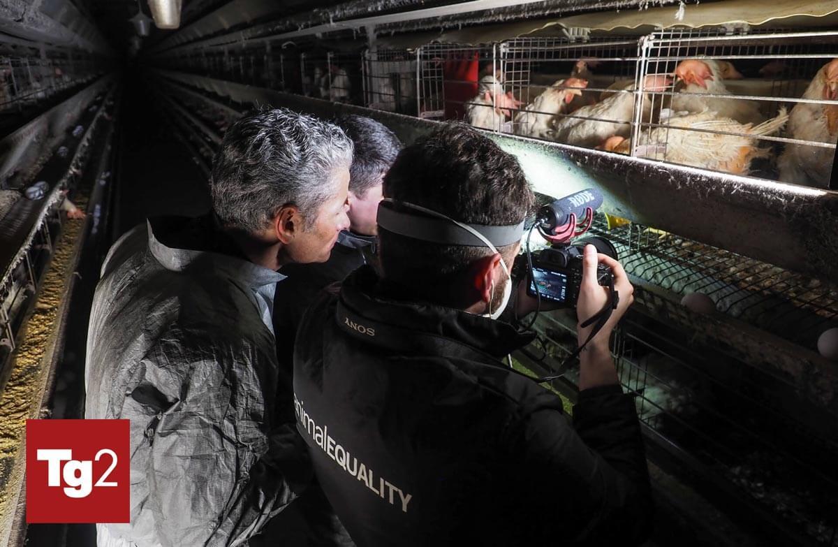 inchieste allevamenti tg2 donazioni animali