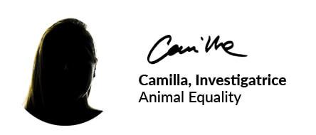 camilla investigatrice animal equality
